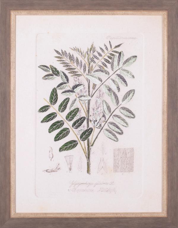Antique Leaves II