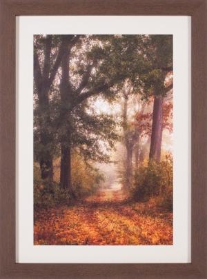 Autumn's Walk I