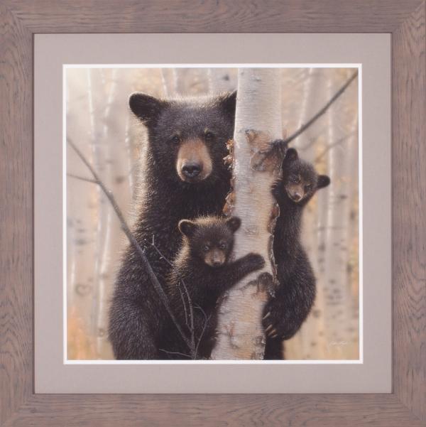 Black Bear Mother and Cubs – Mama Bear