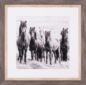 Black & White Horses VIII